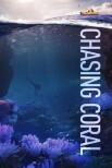 В погоне за кораллами