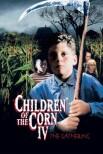 Дети кукурузы 4: Сбор урожая